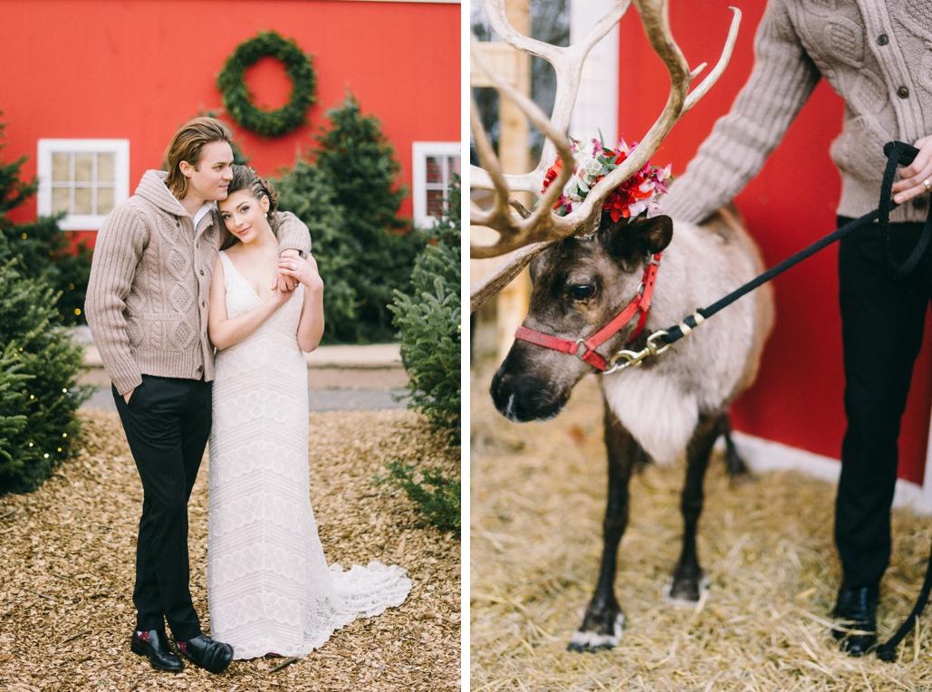 Wedding reindeer Maine